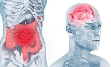 intestin-cerveau-600x367